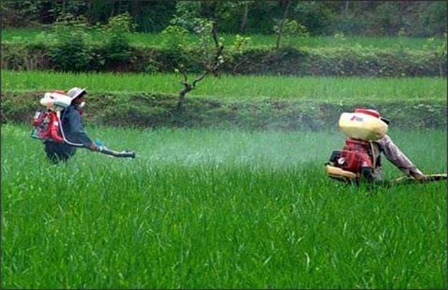 冬季使用农药注意事项