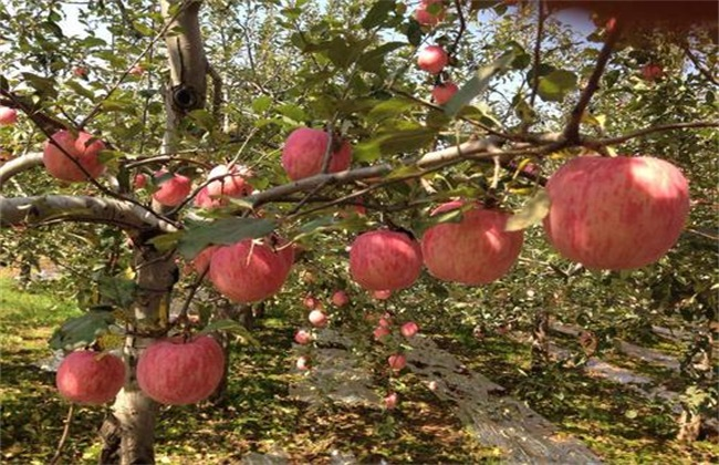 怎么提高 苹果果面 亮度