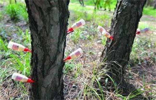 苗木定植假死怎么办