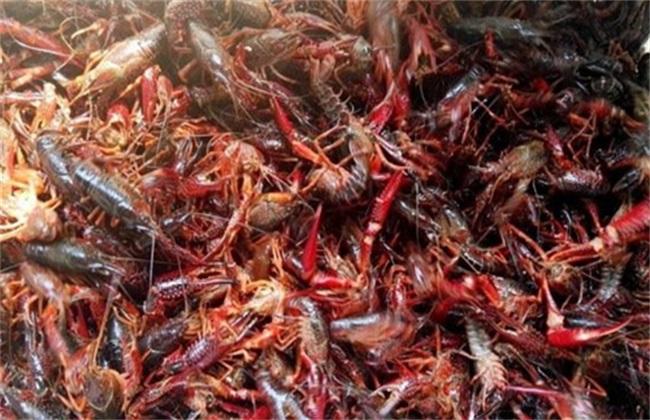 小龙虾养殖风险