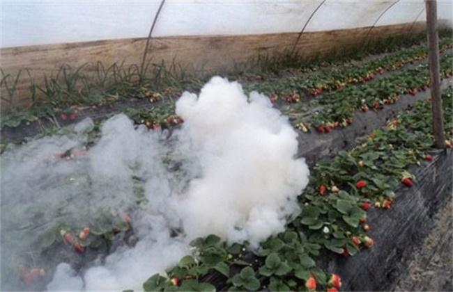 大棚烟雾剂使用方法和注意事项