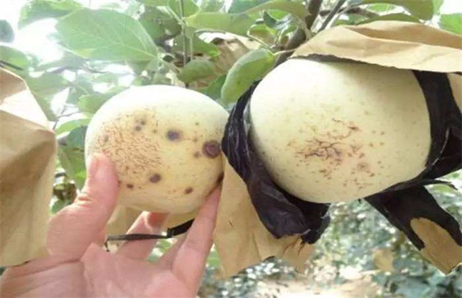 苹果缺钙 原因 防治措施