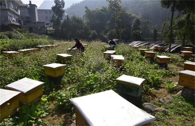 暖冬蜜蜂管理要点