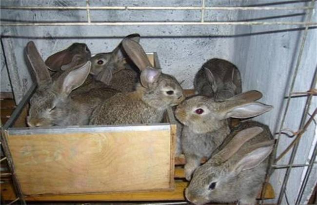 仔兔断奶时间和方法
