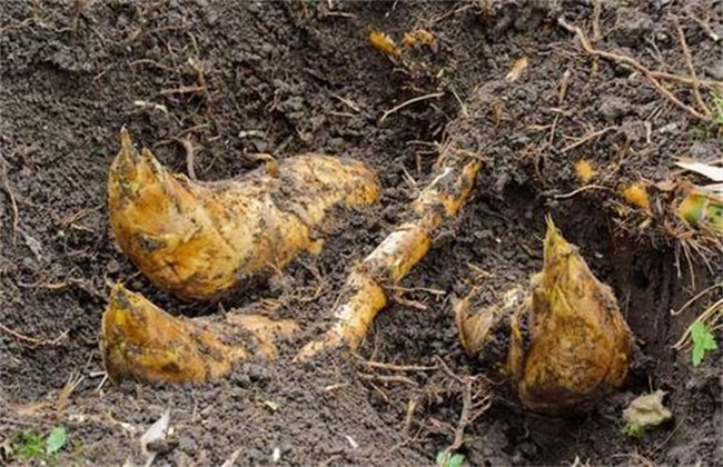 冬笋 多少钱一斤