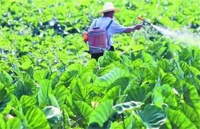 蔬菜种植中如何降低农药残留