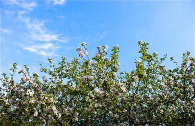 苹果花后 怎么管理