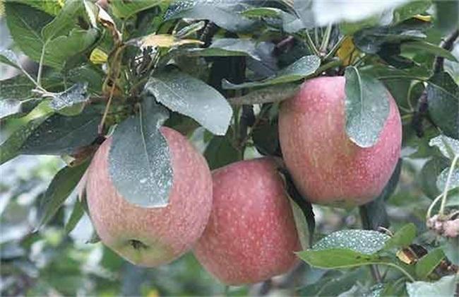 苹果补钙 有哪些误区