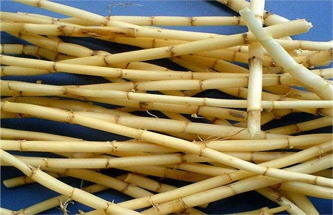 白茅根 作用与功效