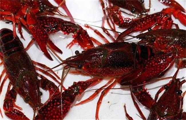 小龙虾养殖条件