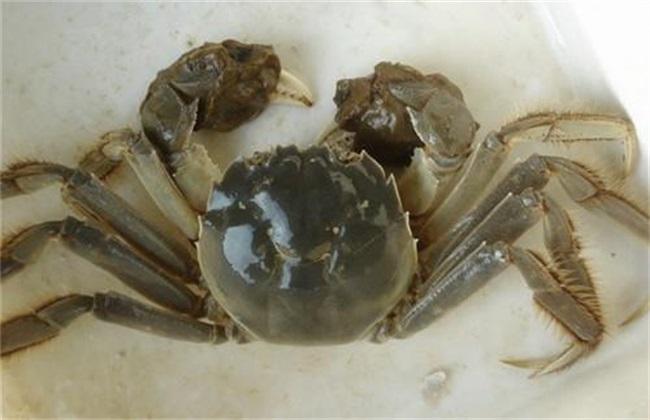 螃蟹养殖常犯的错误