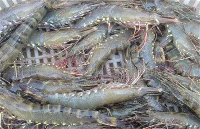 对虾养殖的基本知识