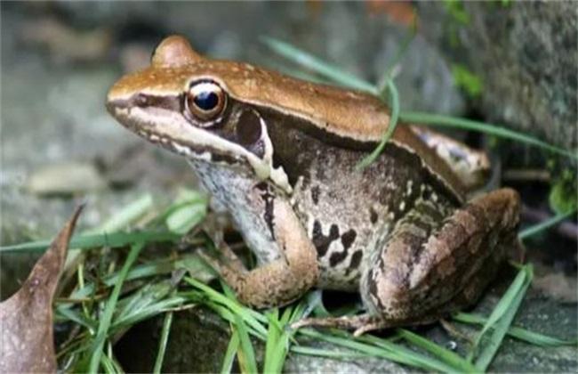 养殖青蛙有什么要求