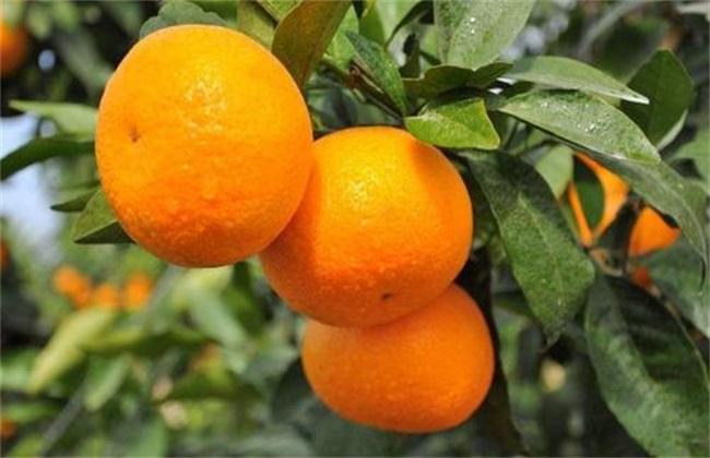水果种植业 风险 有哪些