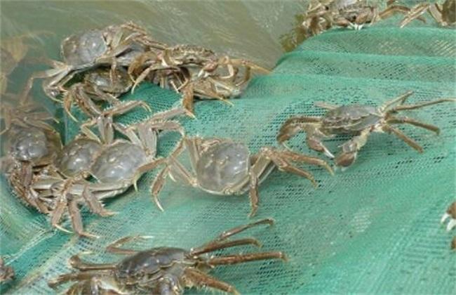 河蟹养殖条件