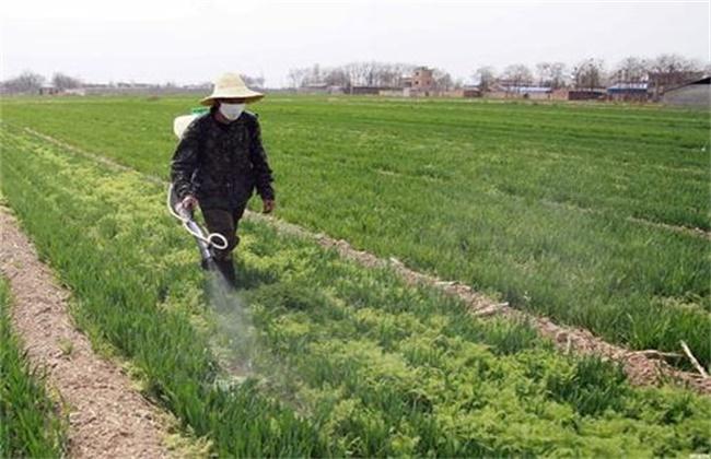 小麦 春季除草 最佳时间