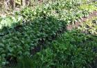 开春种植蔬菜要注意什么