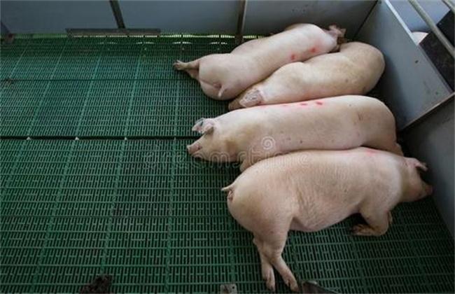 猪舍改建注意事项