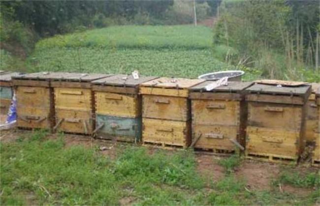 蜜蜂不出门是怎么回事