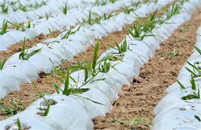 蔬菜出苗不齐原因及解决方法