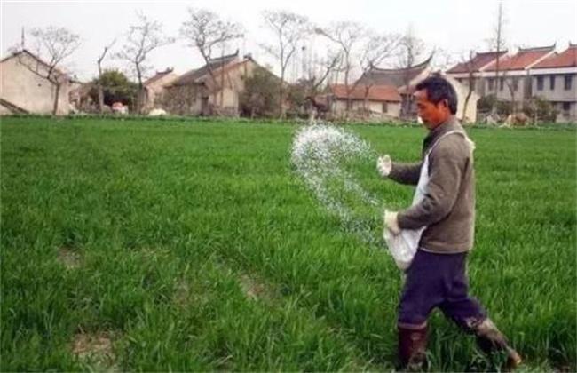 种小麦 如何施磷肥
