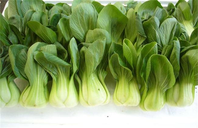 春季 什么蔬菜 效益好时间短