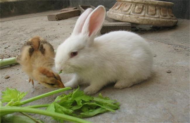 幼兔常见病防治