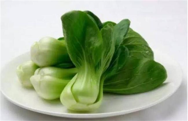 春季 种植什么蔬菜 最简单