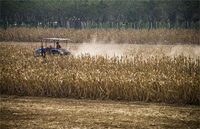 玉米秸秆还田 好处