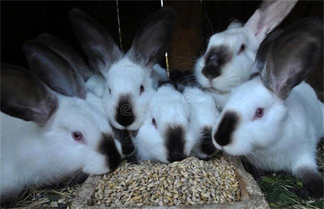 幼兔的饲养管理要点