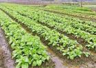 早春蔬菜炼苗方法和注意事项