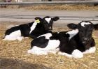 犊牛的消化生理特点