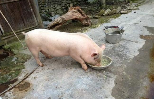 提高猪饲料利用率的措施