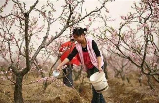 桃树春季施肥要点