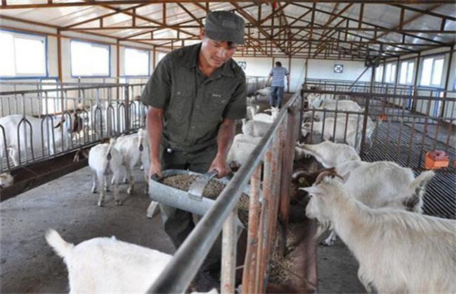 农村创业 怎样才能成功