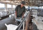 农村创业怎样才能成功