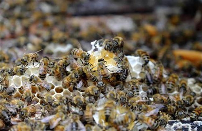 早春蜂群管理要点