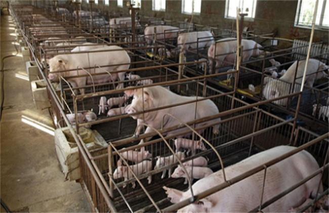 现代化猪场 主要设备 有哪些