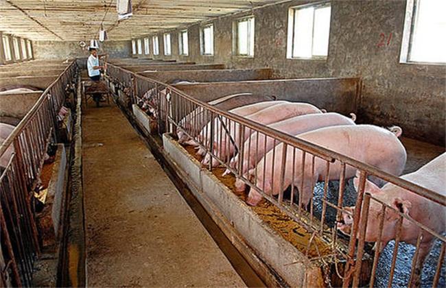 养猪场注意环境除虫