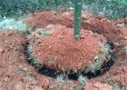 肥料常见施用方式