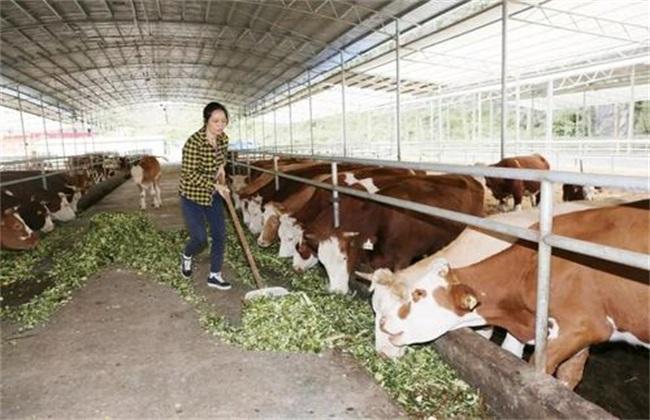 饲料喂牛 干的好 还是湿的好