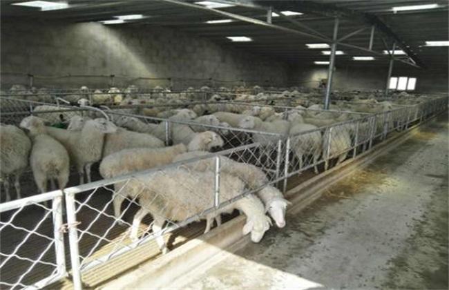 怎么搭建羊舍效果好