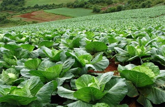 蔬菜施用锌肥注意事项