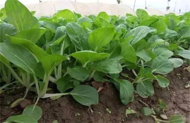 农药化肥使用存在问题