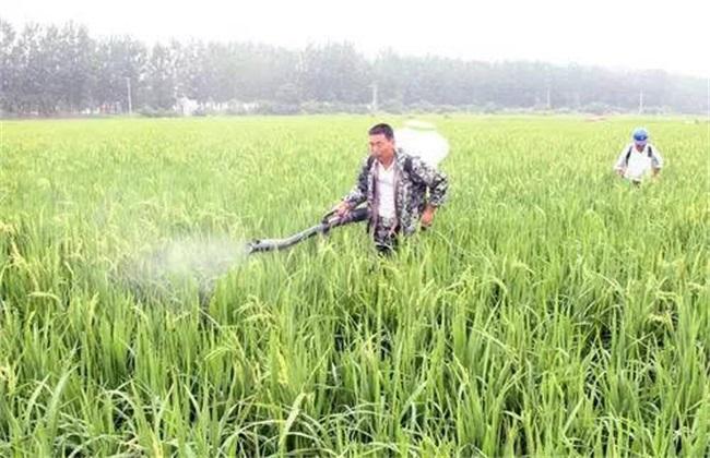杀虫剂如何使用效果最佳