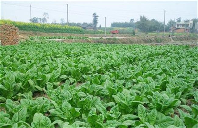 植物生长调节剂的使用方法
