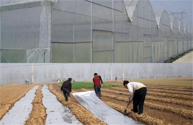 蔬菜大棚 地膜覆盖 注意事项