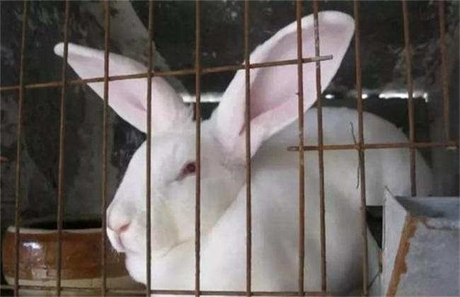 母兔流产怎么回事