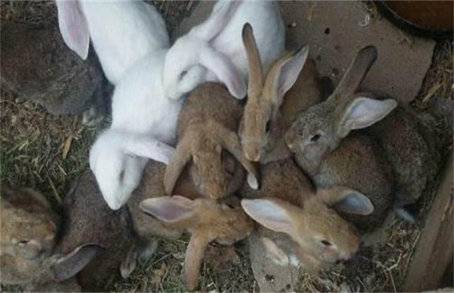 如何提高幼兔成活率