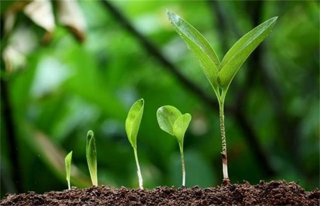 植物生长调节剂优点